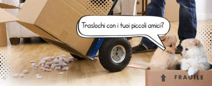 traslocare con gatti