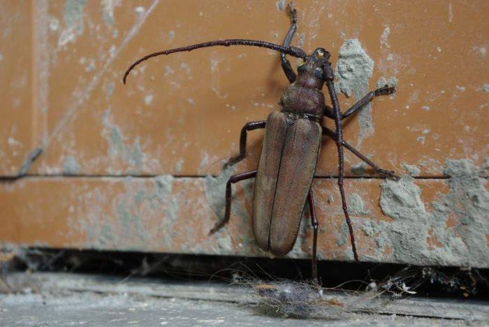 foto scarafaggio a casa
