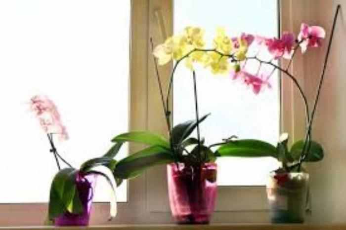 tutto sulle piante da interno